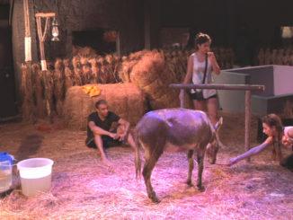 Bigg Boss 11 contestants feed the donkey